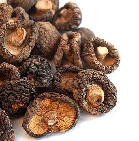 Грибы шиитаке: способы выращивания, полезные и вредные свойства
