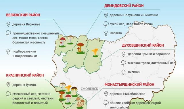 Грибы Краснодарского края: съедобные и ядовитые. Грибные места и начало сезона