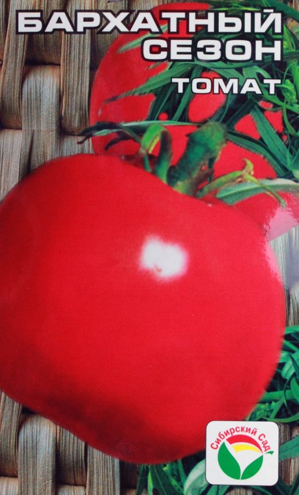Томат Таймыр: описание сорта, фото, агротехника, посадка в грунт, уход