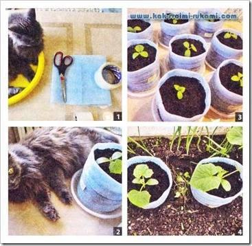 Выращивание огурцов в ведрах: сорта, посадка, уход, отзывы