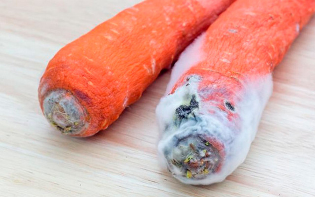 Болезни и вредители моркови: признаки, лечение и профилактика