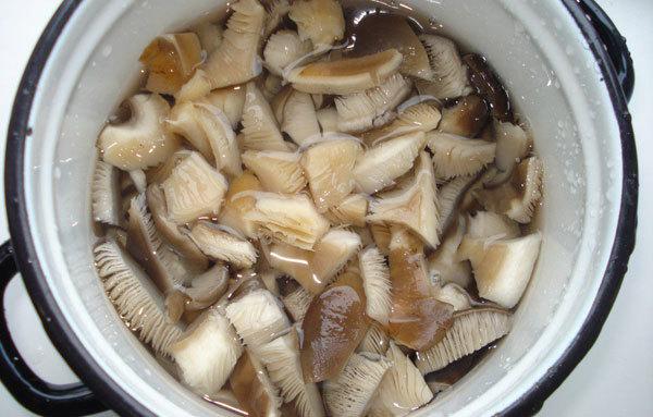 Как заморозить грибы вешенки сырыми, вареными, жареными в домашних условиях