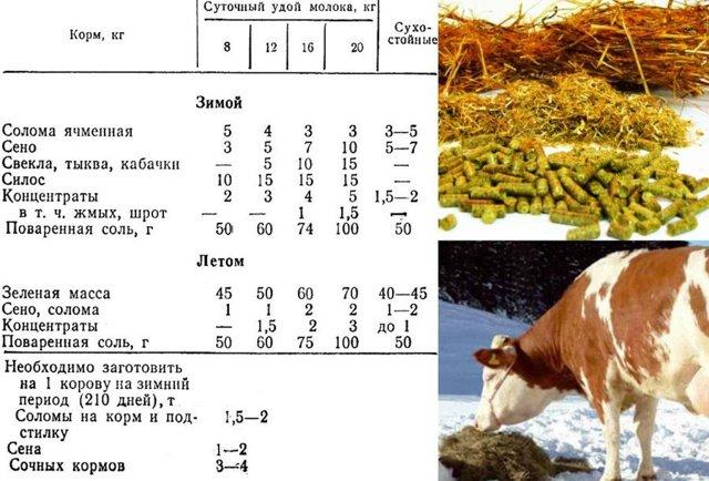 Рацион кормления дойных коров: нормы, полезные советы, разновидности питания