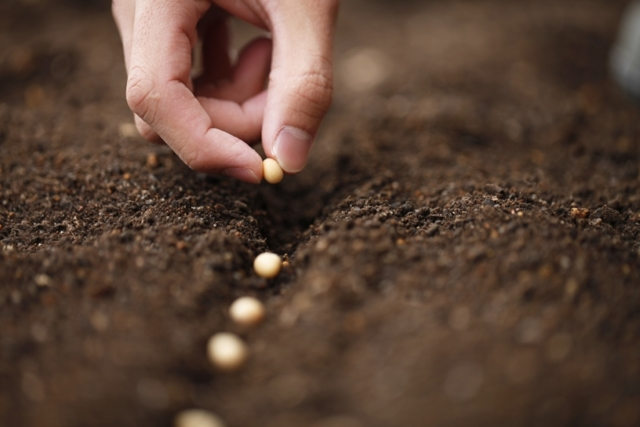 Как сажать помидоры на рассаду: подготовка семян и грунта, посев, уход за ростками