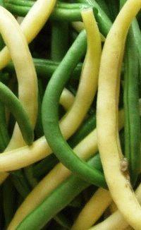 Сорта спаржевой фасоли: фото и описание, разновидности, агротехника