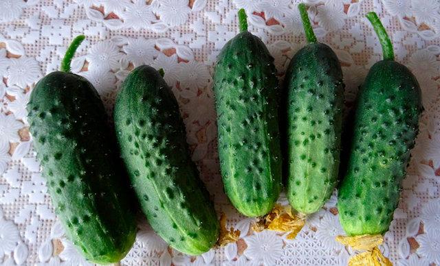 Пучковые огурцы: лучшие сорта, описание, фото, секреты выращивания, отзывы