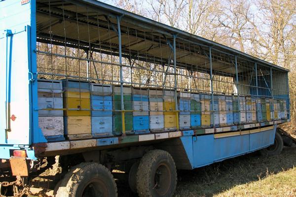 Павильон для пчёл своими руками: пошаговая инструкция и полезные советы
