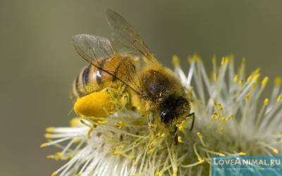 Стимовит для пчел: инструкция по применению, состав