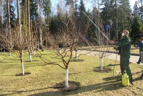 Подкормка плодовых деревьев и кустарников весной: чем и как удобрять?
