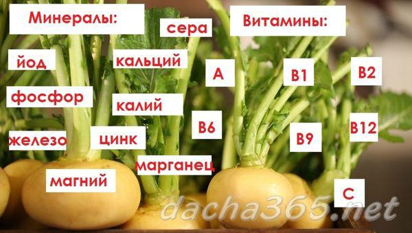 Репа для Сибири: подробное описание 10 лучших сортов