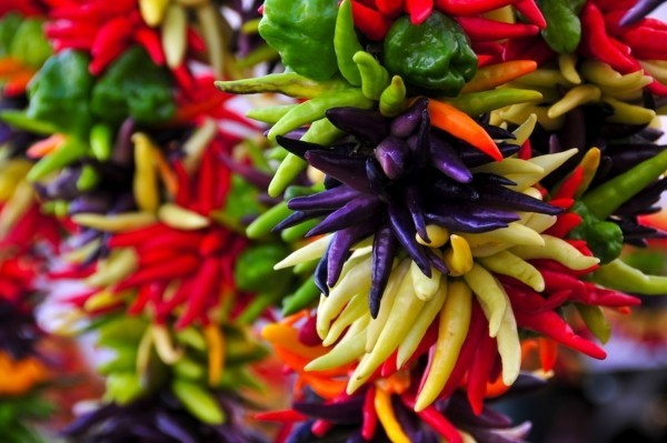 Кайенский перец: описание с фото, польза, выращивание, отзывы
