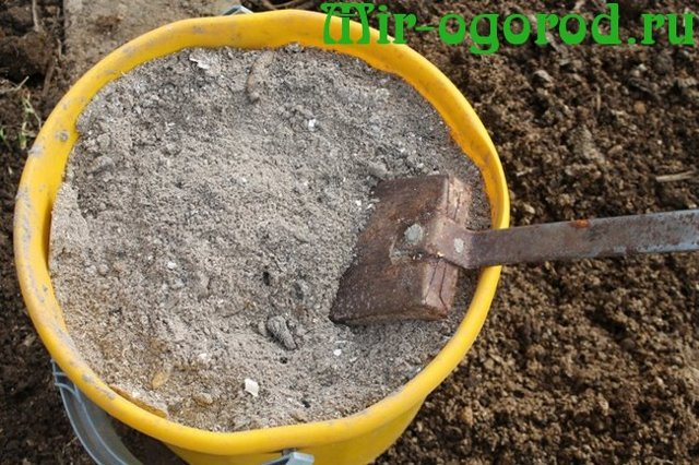 Удобрения редиса: правила и виды подкормки