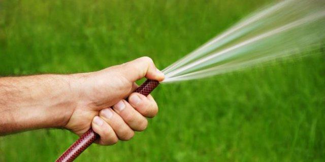 Полив чеснока: правила, частота, способы, сроки полива в открытом и закрытом грунте