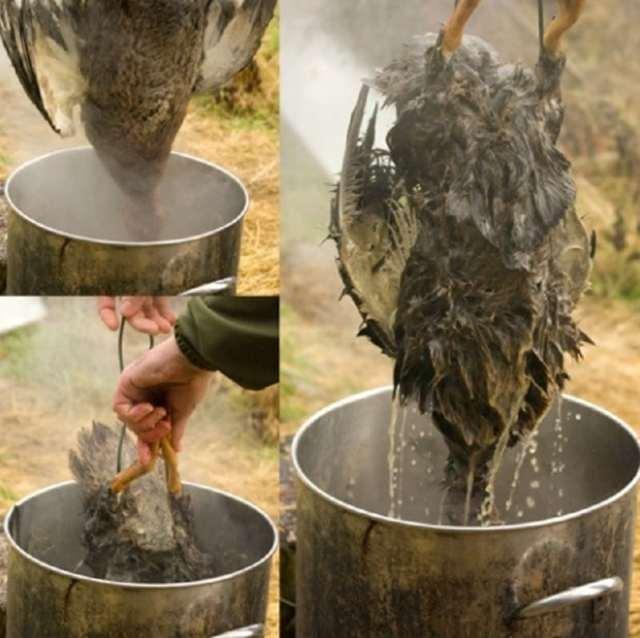 Как быстро ощипать гуся в домашних условиях: 7 способов и полезные рекомендации