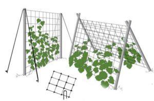 Сетка для огурцов: разновидности, инструкция по установке и изготовлению