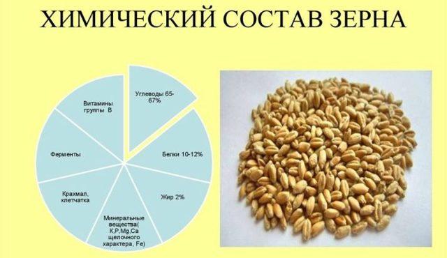 Сорта ячменя: озимые, яровые, высокоурожайные, пивоваренные