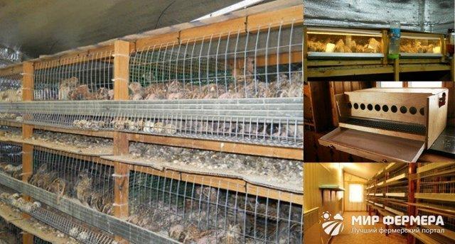 Содержание перепелов зимой в сарае: оборудование помещения, клеток, советы по уходу