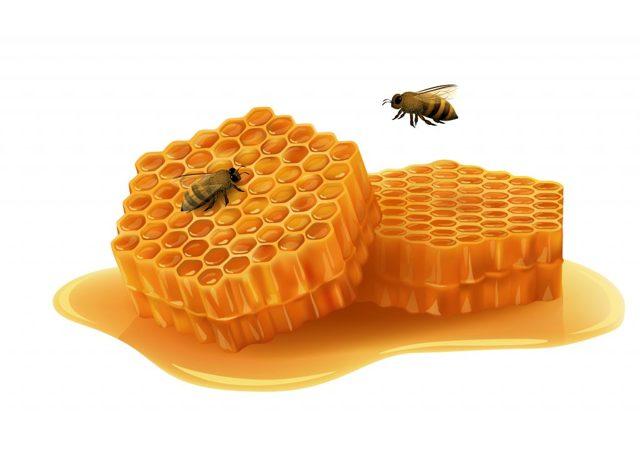 Пчелиные соты: как появляются, предназначение, строение, польза