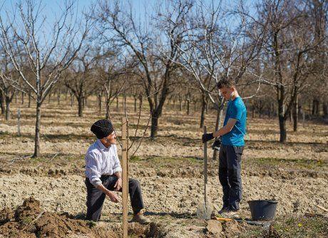 Посадка абрикоса осенью, подготовка саженца, почвы, схемы посадки и правила по уходу