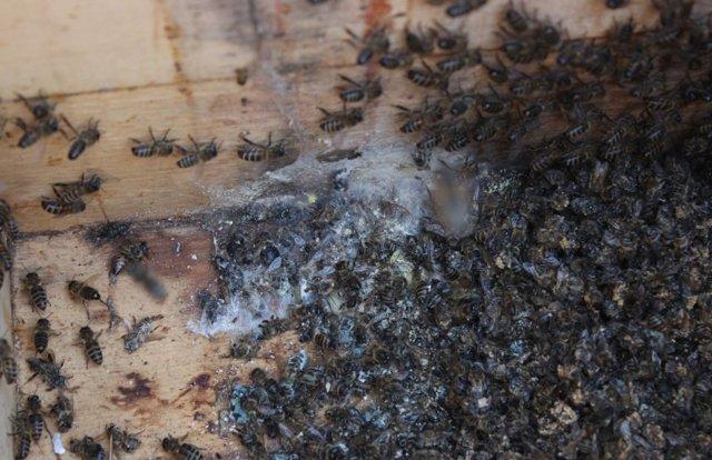 Леток для пчел: что это такое и как сделать своими руками?
